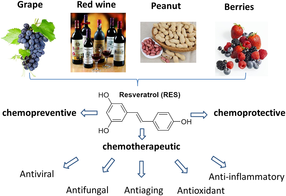 Frontiers A Review Of Resveratrol As A Potent Chemoprotective