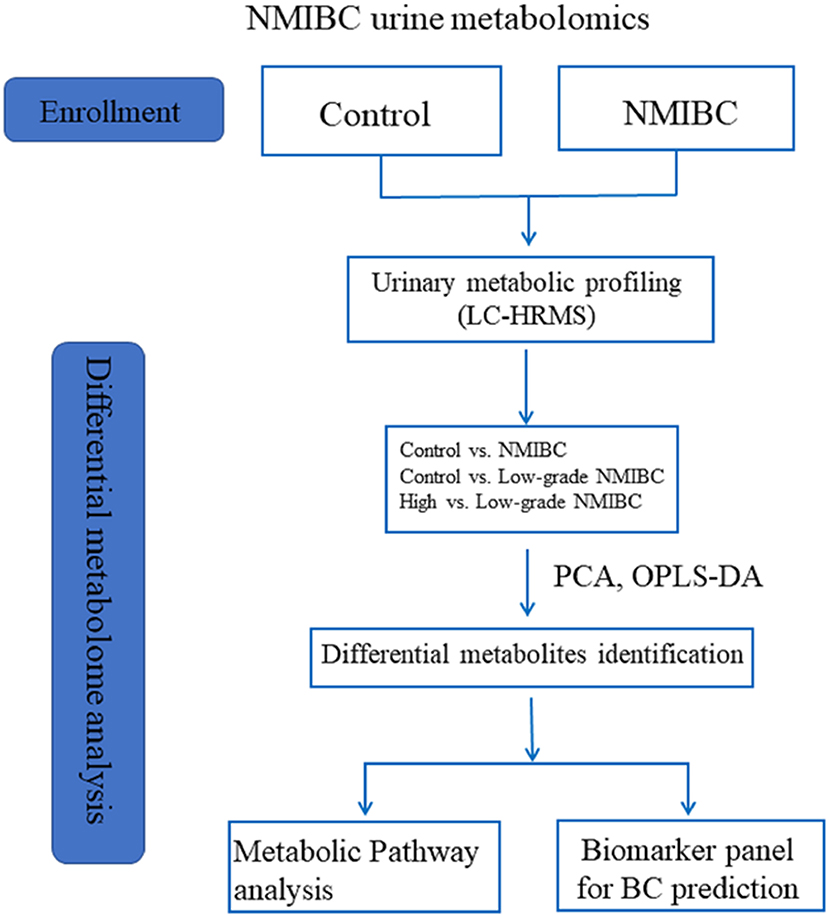 New Biomarker Panel Could Accelerate >> Frontiers Metabolomics Of Non Muscle Invasive Bladder Cancer