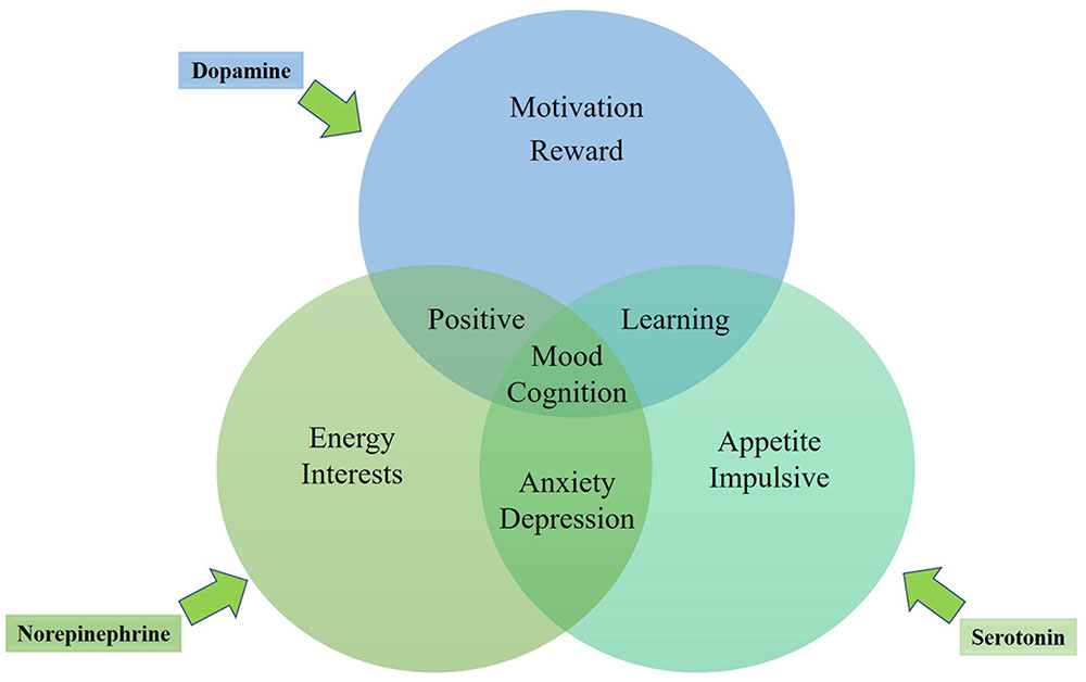 Frontiers | Emotional Roles of Mono-Aminergic ...