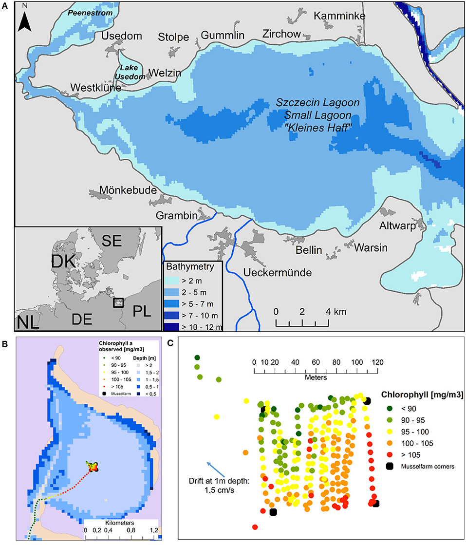 Frontiers | Spatial Effects of Different Zebra Mussel