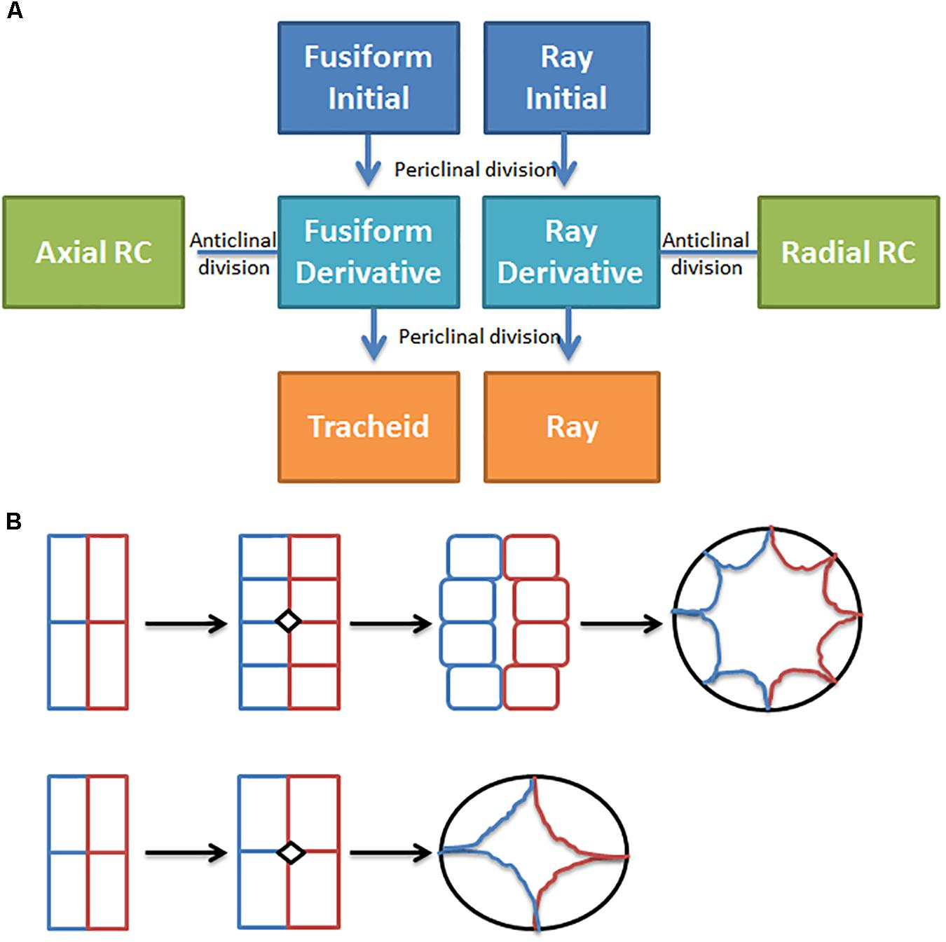 Frontiers | Breeding and Engineering Trees to Accumulate
