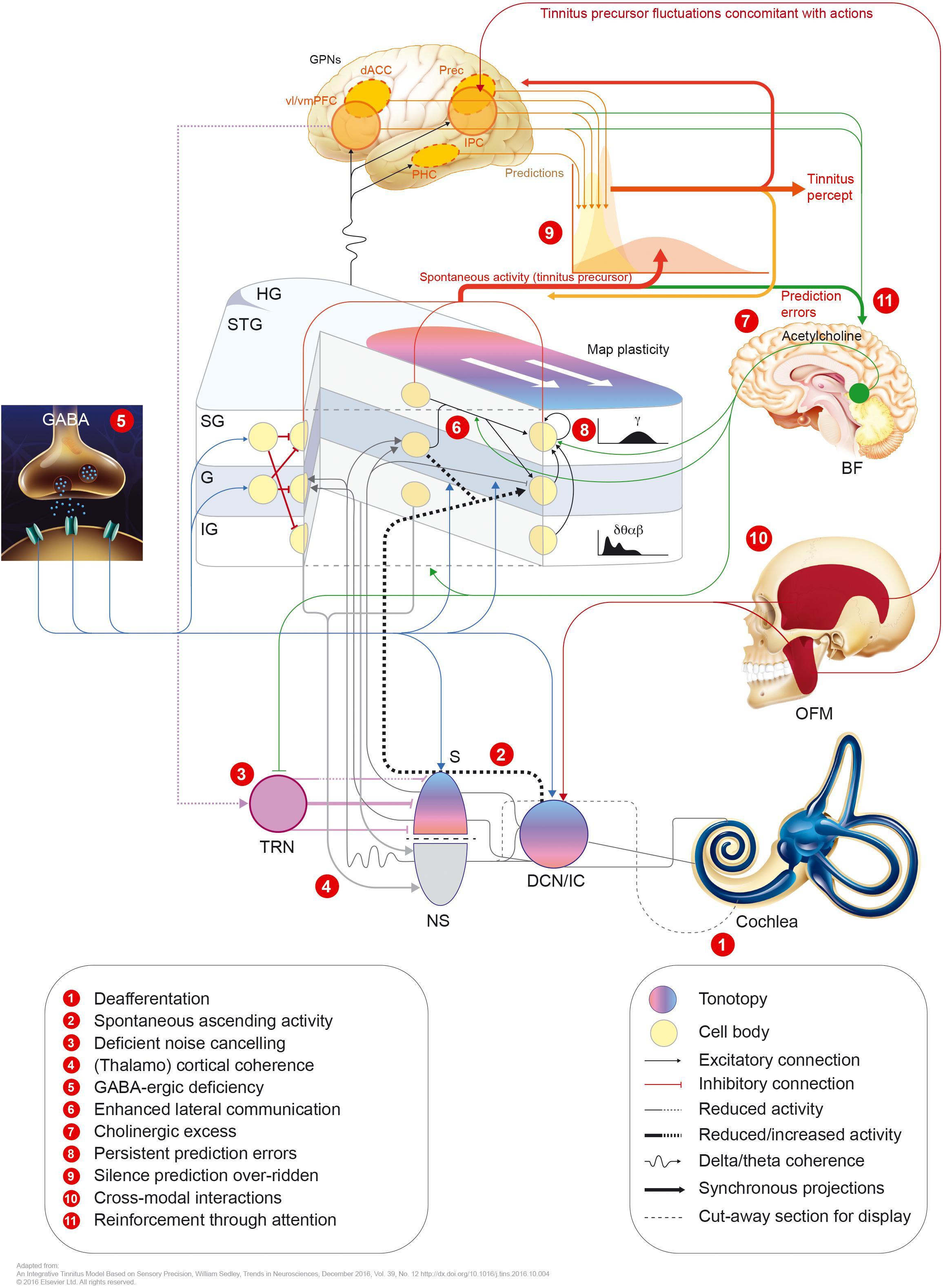Frontiers | Pathophysiology of Subjective Tinnitus: Triggers