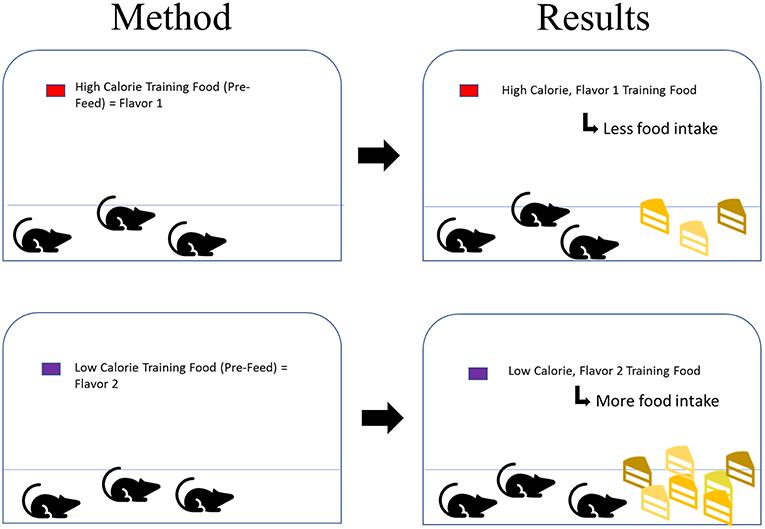 איור 2 - חולדות קיבלו מזון שהיה עתיר בקלוריות שהיה מומתק עם גלוקוז (למעלה) או דל בקלוריות מאחר שהיה מומתק באמצעות סכרין, ממתיק מלאכותי (למטה).