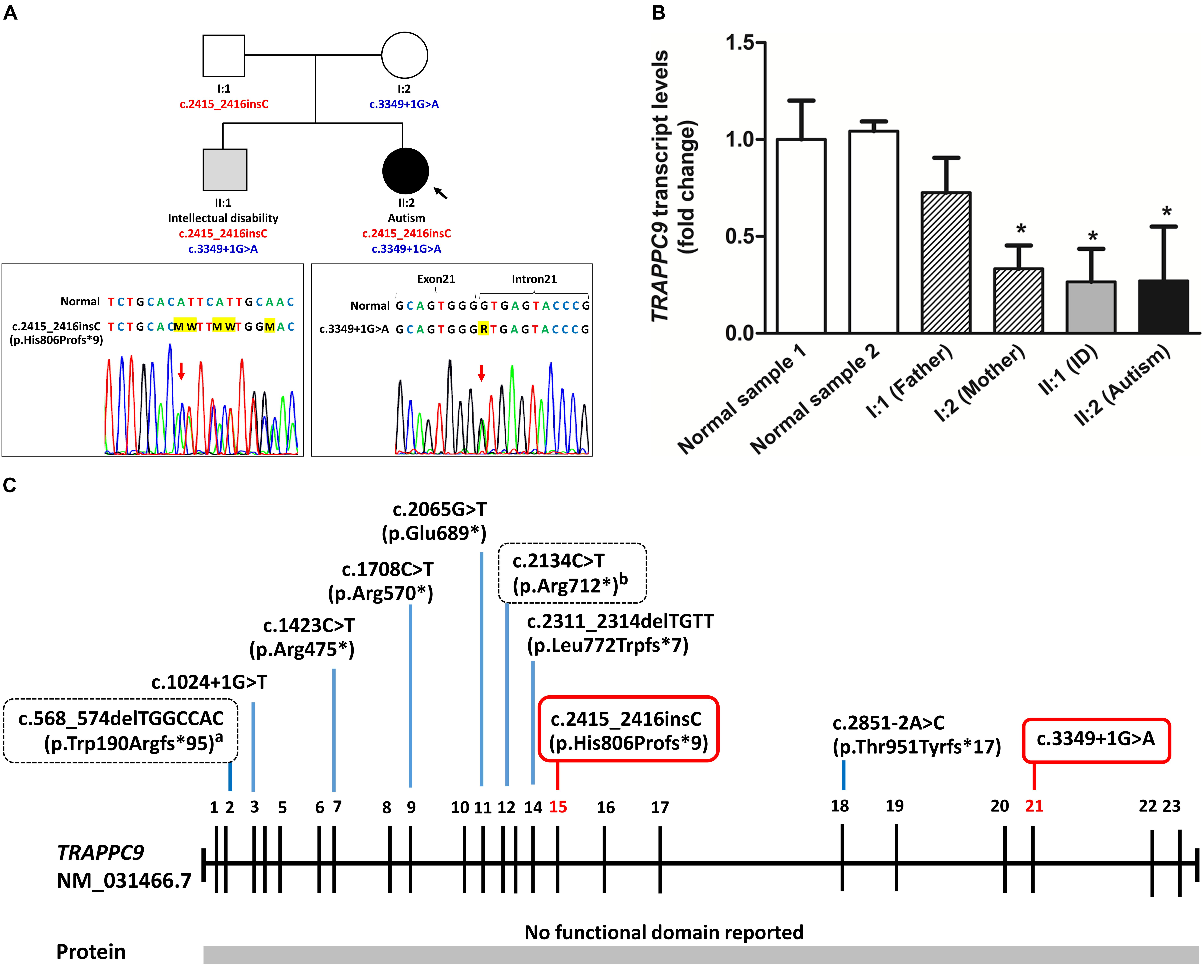 Frontiers | Novel Compound Heterozygous Mutations in the