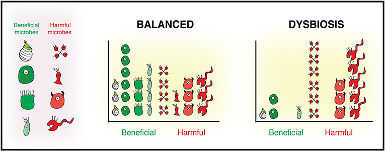 Figure 1 - Balanced: The balanced gut microbiota shows a healthy number and mix of beneficial and harmful microbes.
