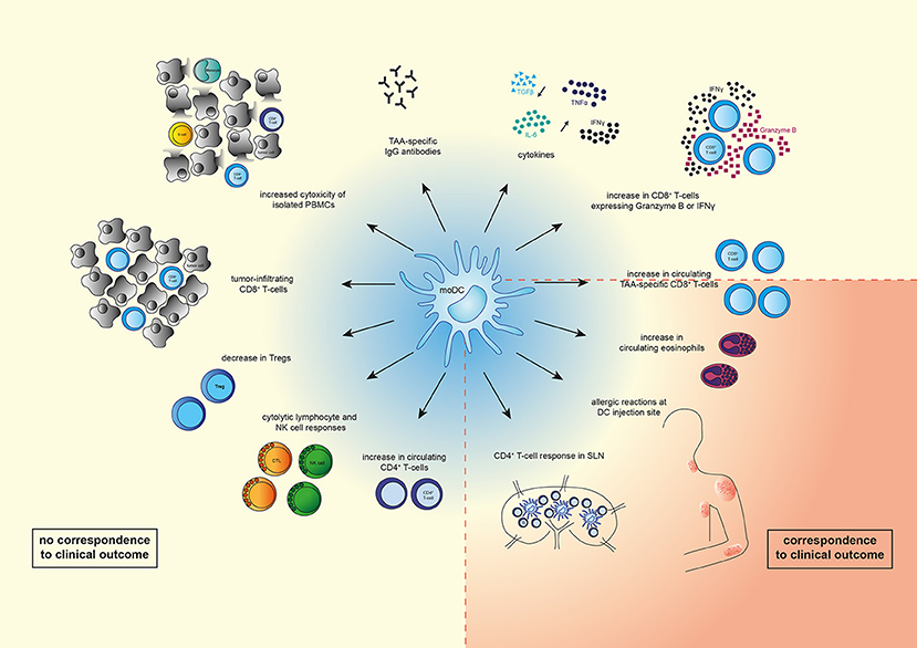 Frontiers | Current State of Dendritic Cell-Based Immunotherapy