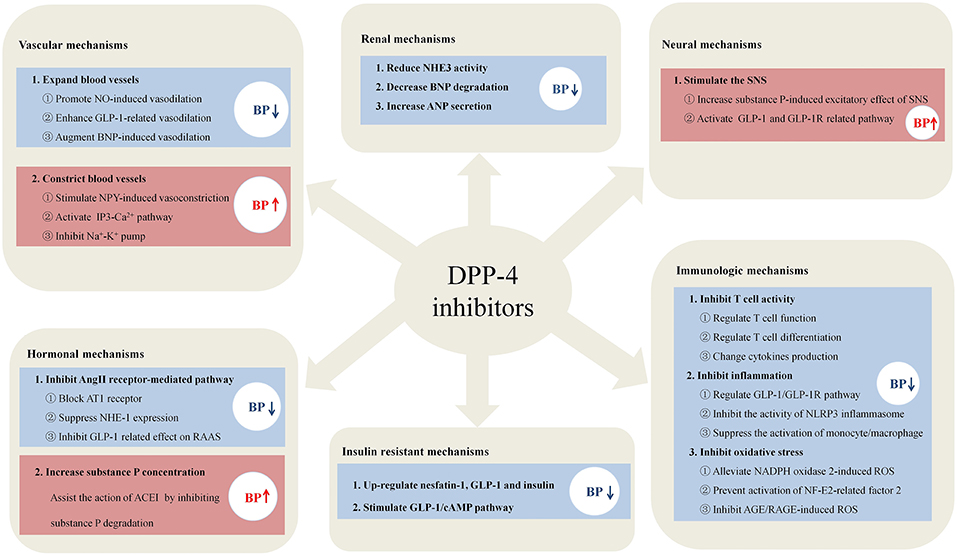 Frontiers   DPP-4 Inhibitors as Potential Candidates for