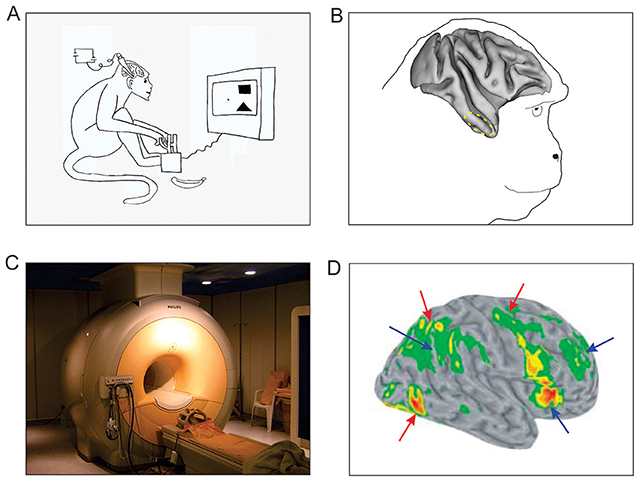 Figure 2 - Studying brain responses during visual search.