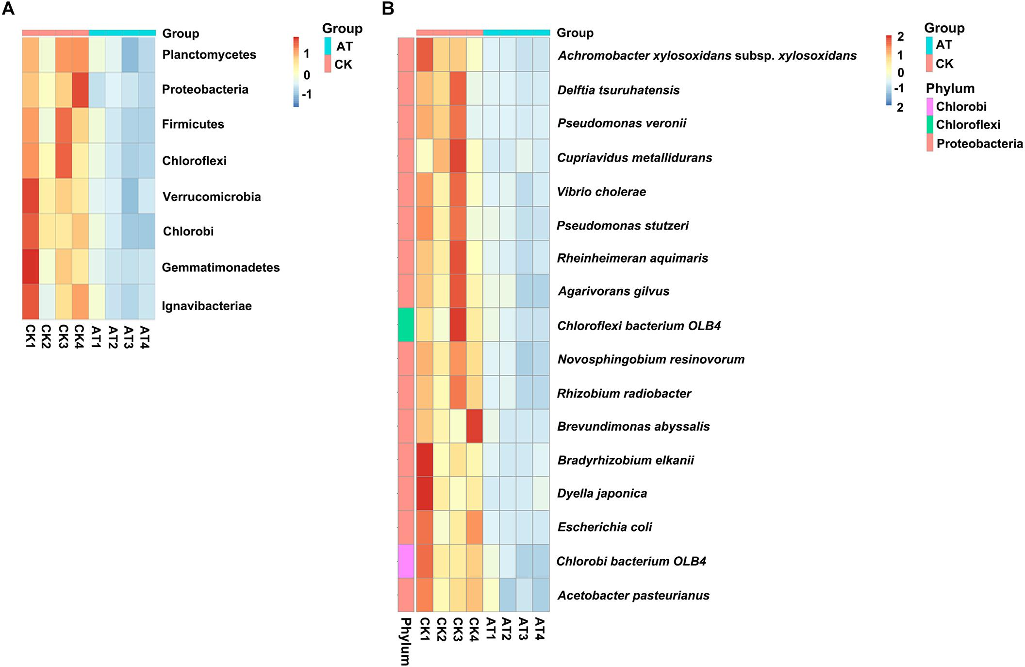 Frontiers | Bacterial Community Diversity and Screening of