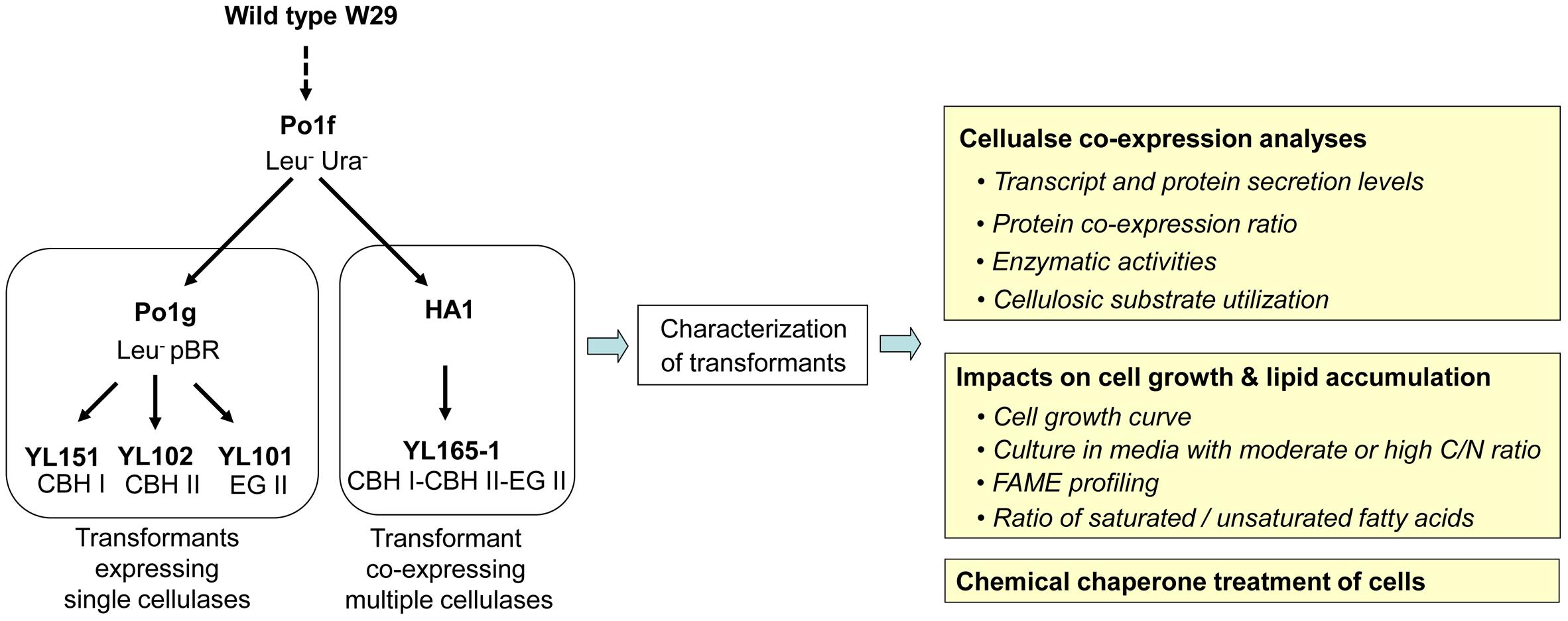 Enigmatic Chemical Tag Is Altered In >> Frontiers Ameliorating The Metabolic Burden Of The Co Expression