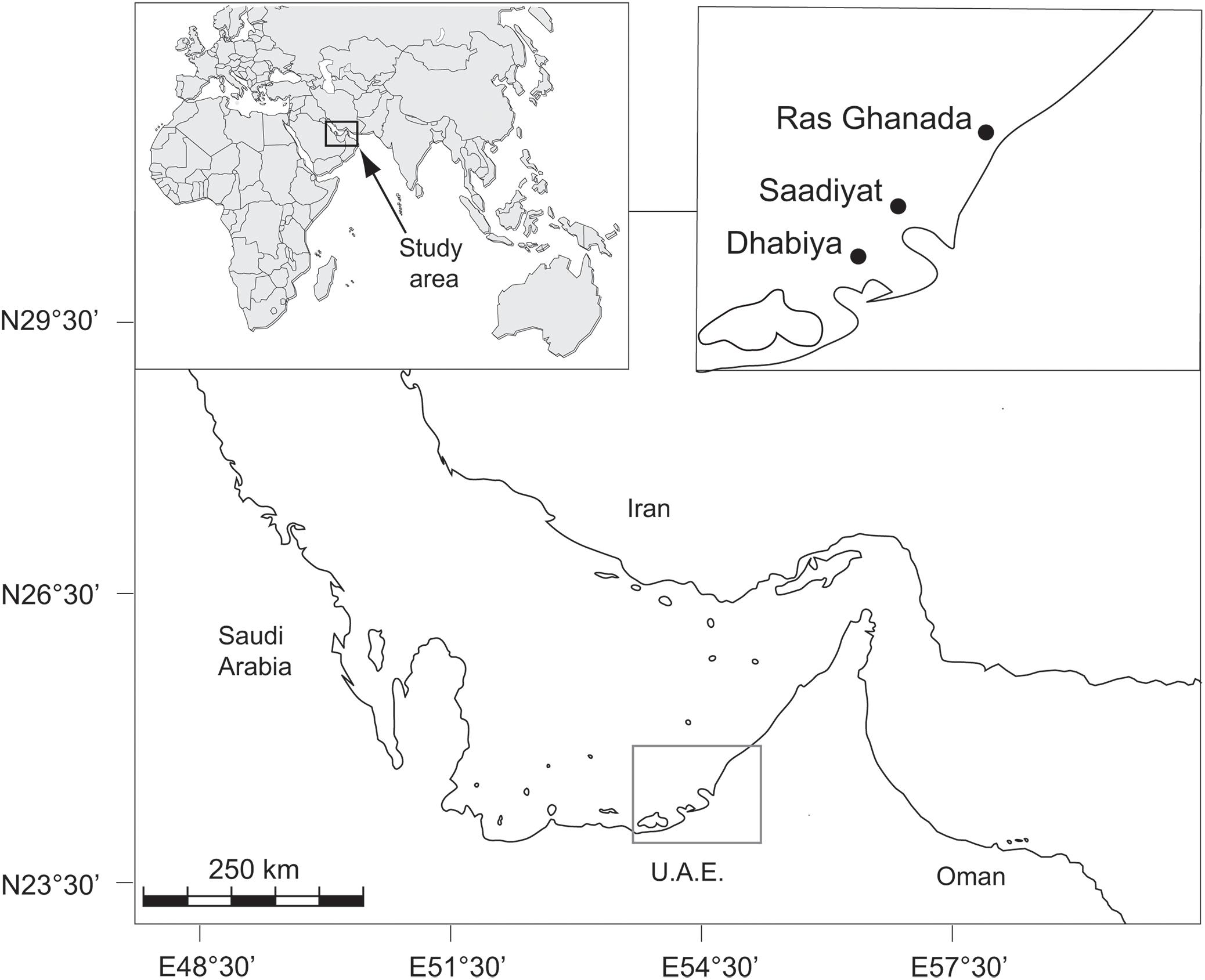 Frontiers | Coral Bleaching in the Persian/Arabian Gulf Is Modulated
