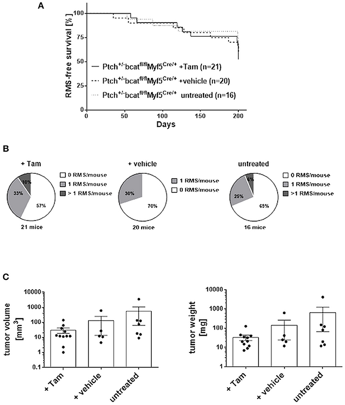 Frontiers | Canonical WNT/β-Catenin Signaling Plays a Subordinate