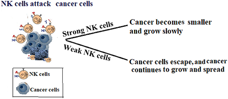 Figure 2 - Healthy vs. unhealthy natural killer cells.