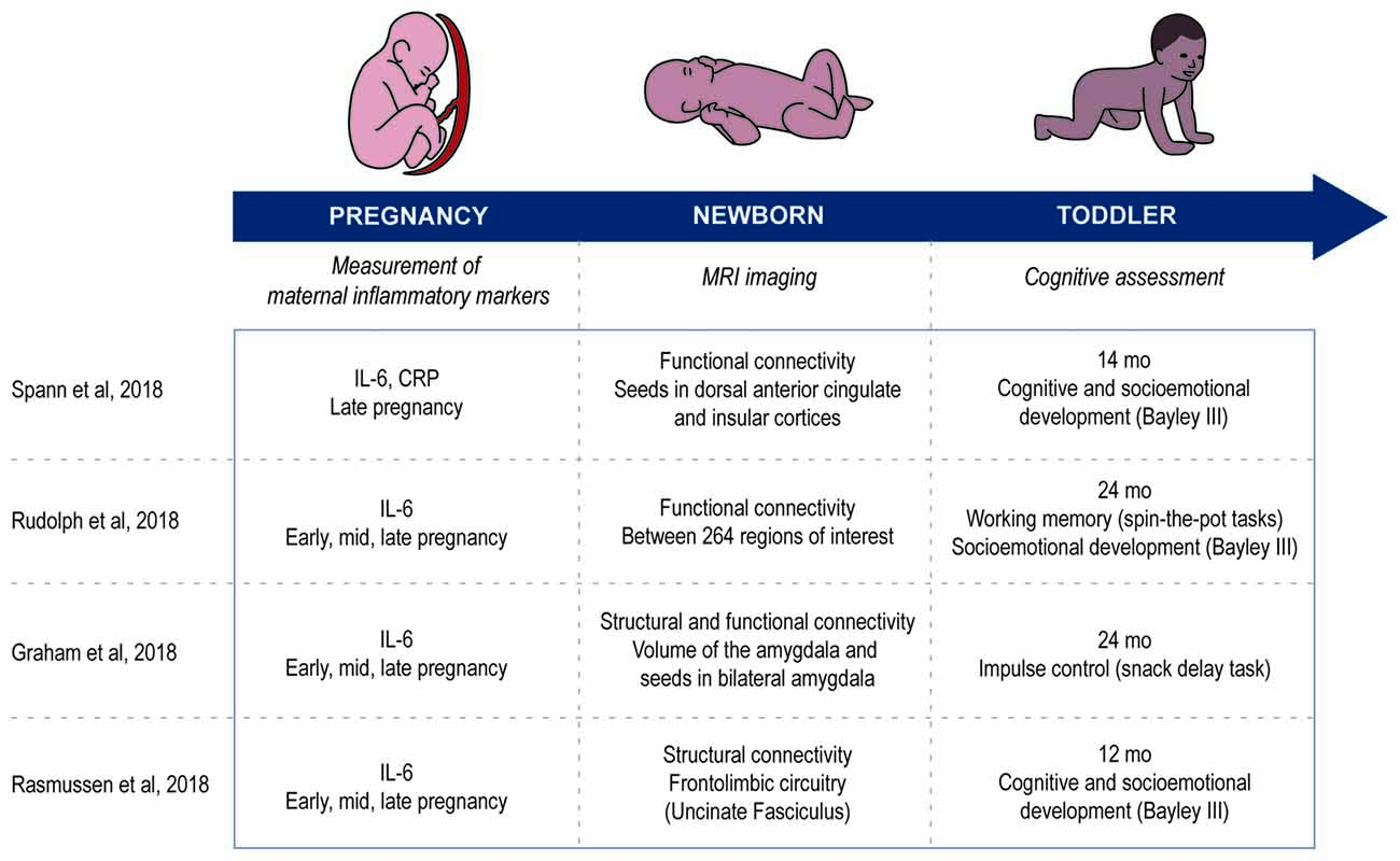Prenatal Infection May Alter Behavior >> Frontiers Increasing Role Of Maternal Immune Activation In