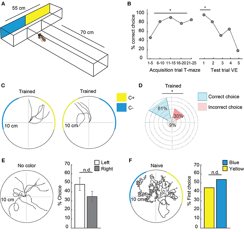 Frontiers | Learning and Its Neural Correlates in a Virtual