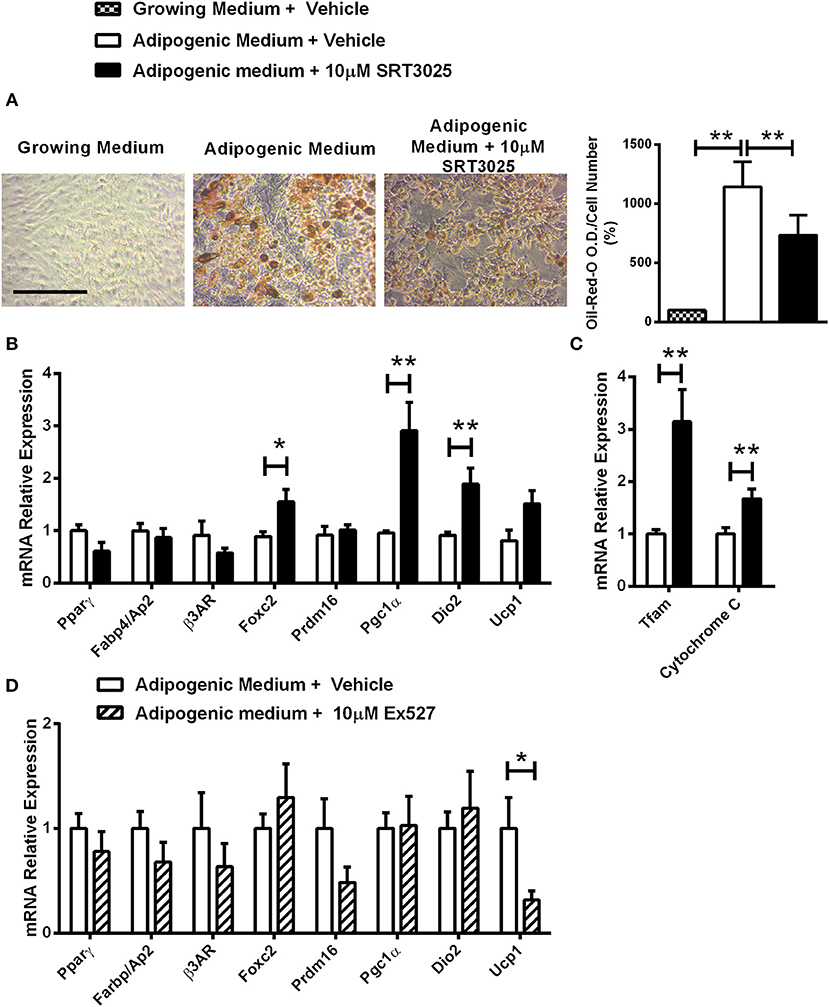 Frontiers | Sirt1 Promotes a Thermogenic Gene Program in Bone Marrow