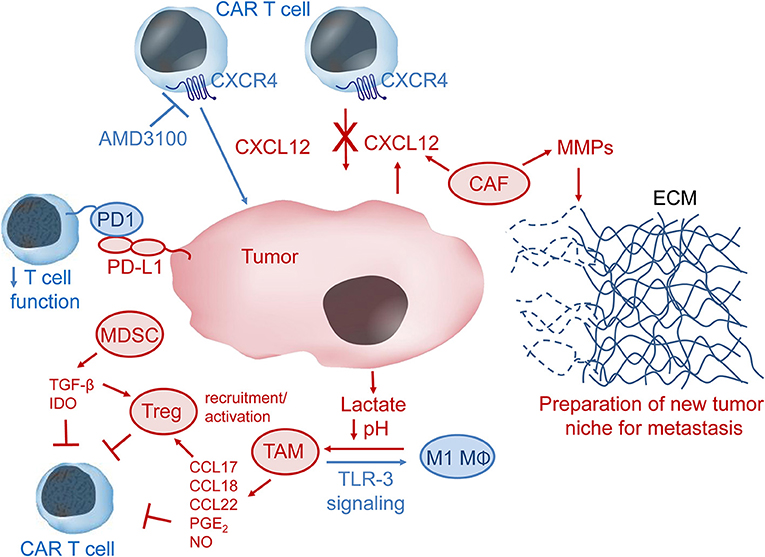 Frontiers Engineering Car T Cells For Improved Function Against