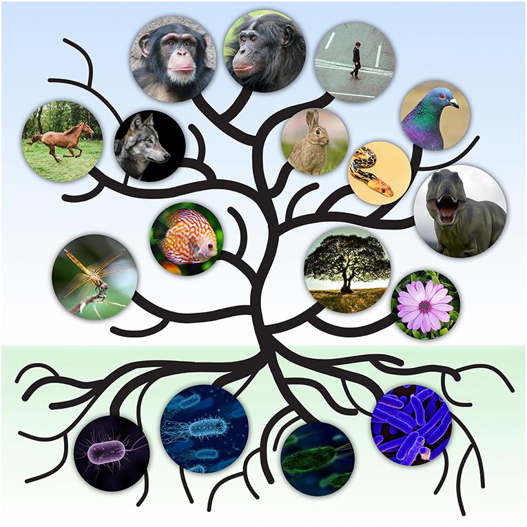 Figure 1 - The Tree of Life.