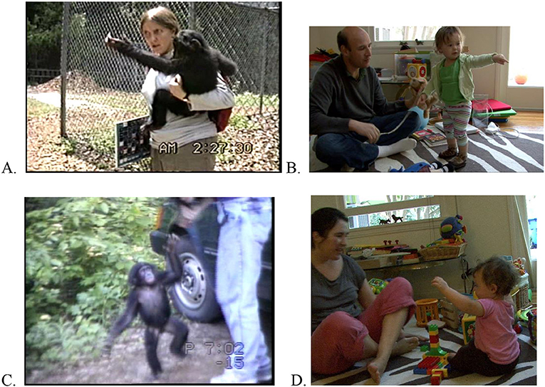 Figure 3 - Examples of go and up gestures.
