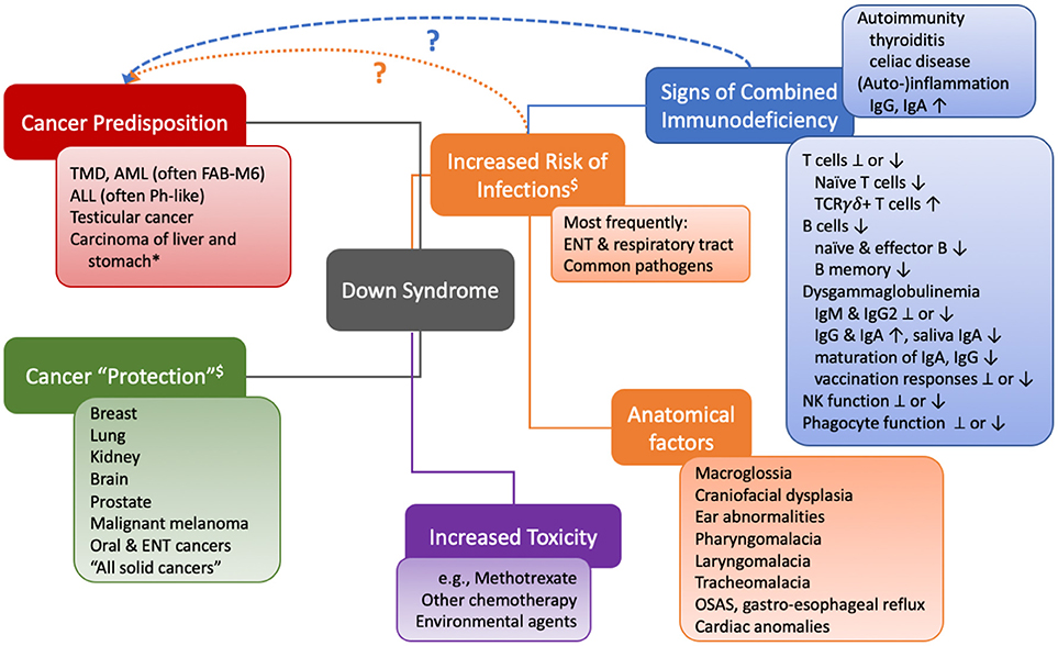 Frontiers The Pattern Of Malignancies In Down Syndrome And Its Potential Context With The Immune System Immunology