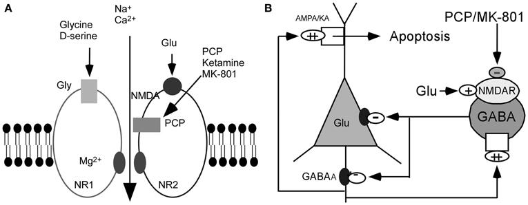 Progress towards validating the nmda receptor hypofunction hypothesis of schizophrenia