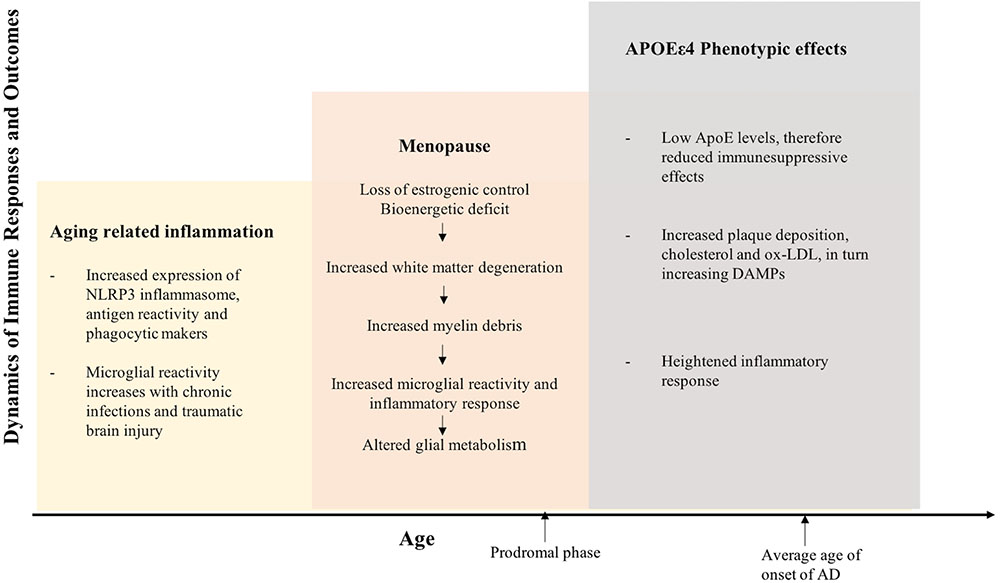 Frontiers | Inflammation: Bridging Age, Menopause and APOEε4