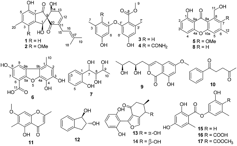 Frontiers | Phenol Derivatives From the Sponge-Derived Fungus