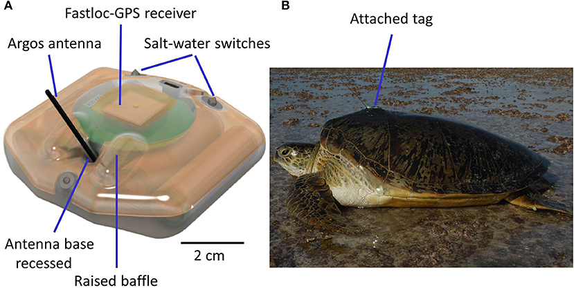 Frontiers | Satellite Tracking Sea Turtles: Opportunities