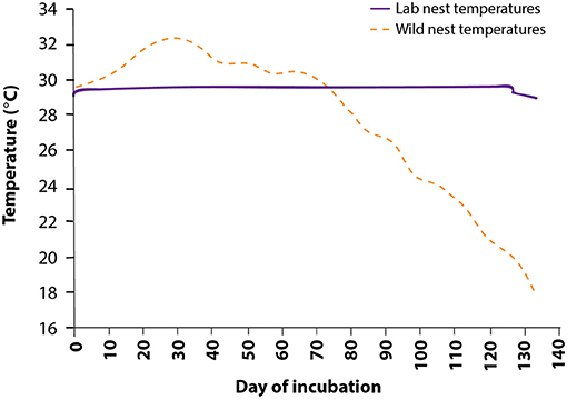 Figure 3 - Temperatures used to incubate Gila monster eggs in the lab.