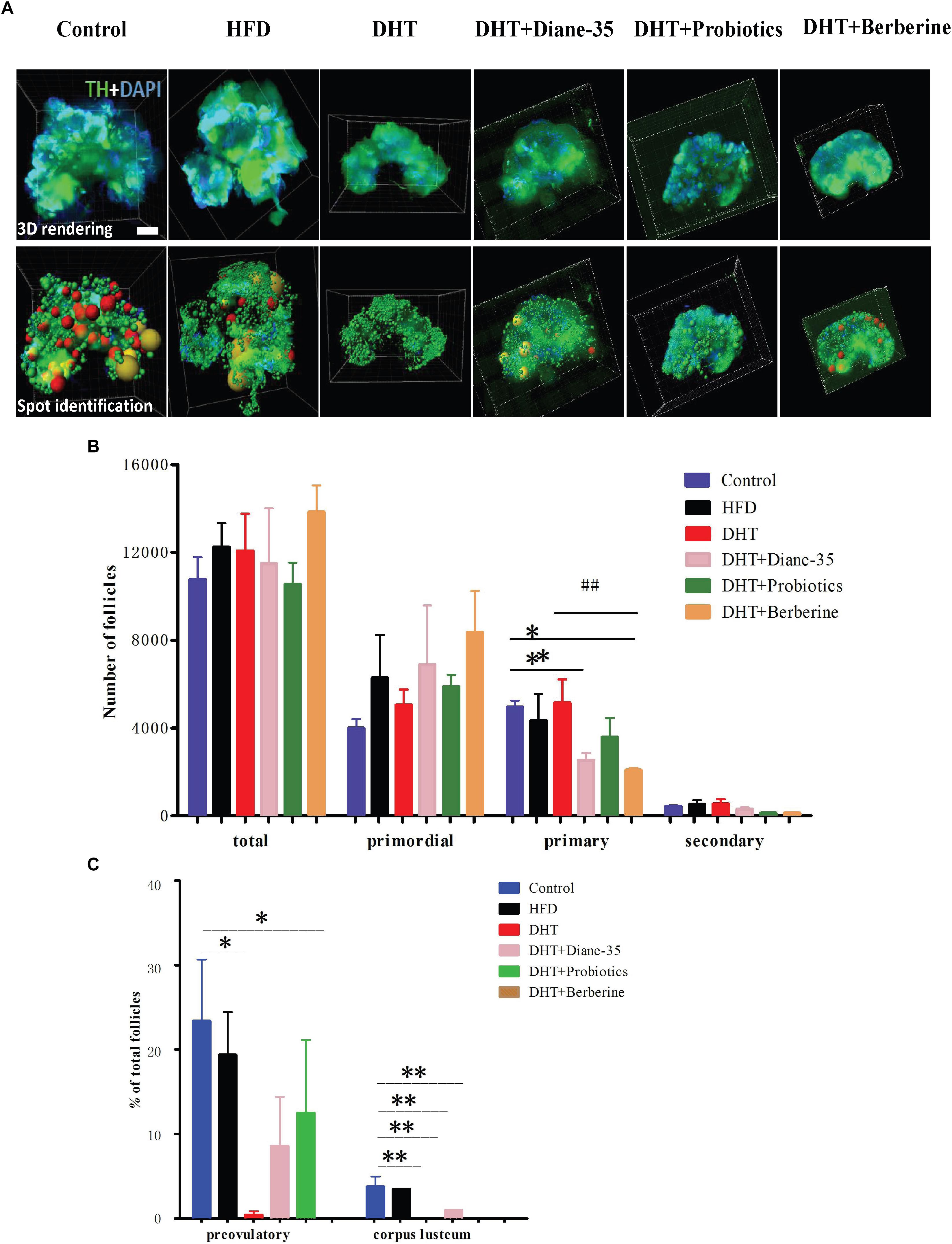 Frontiers | Diversity of the Gut Microbiota in Dihydrotestosterone