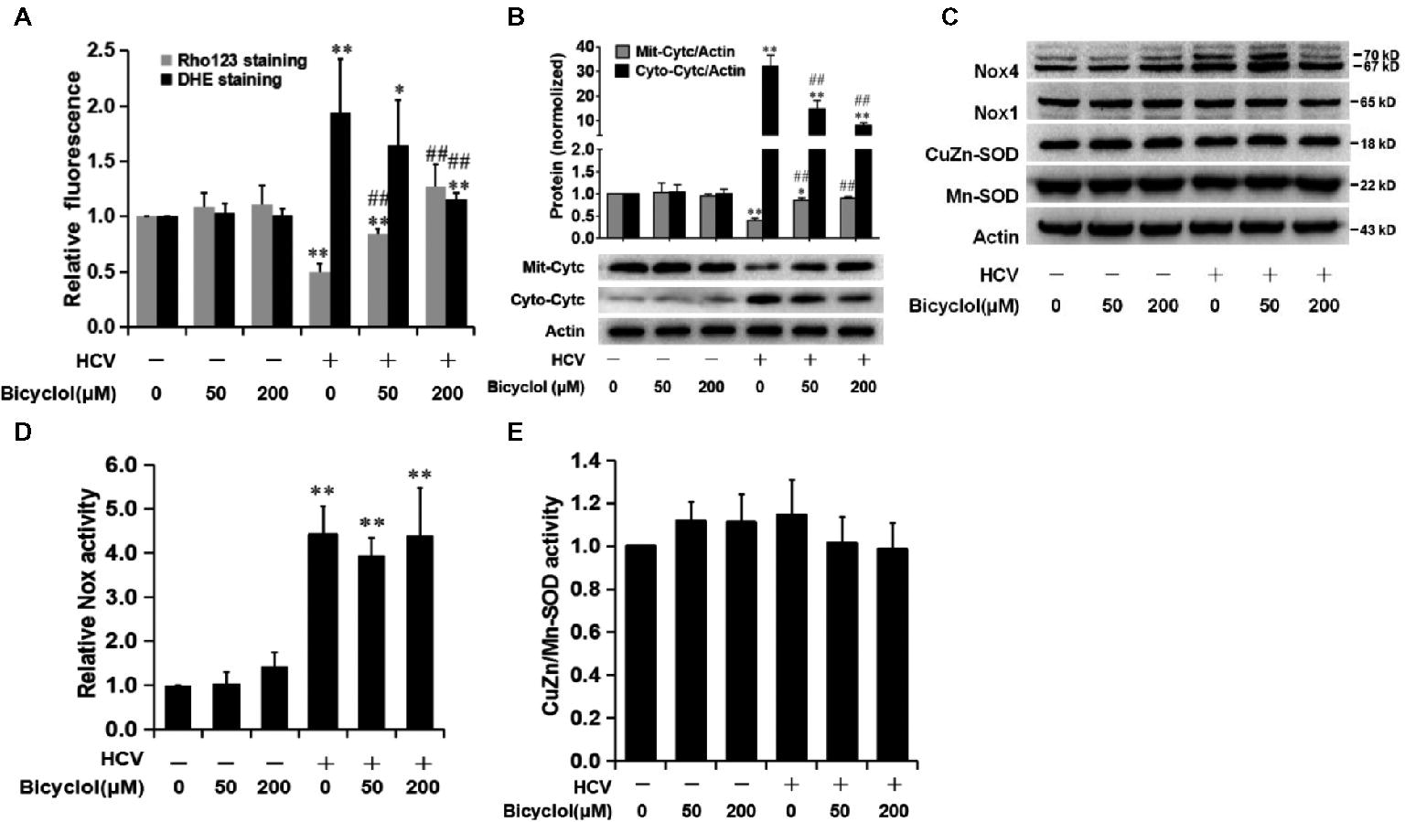 Frontiers   Bicyclol Attenuates Liver Inflammation Induced by
