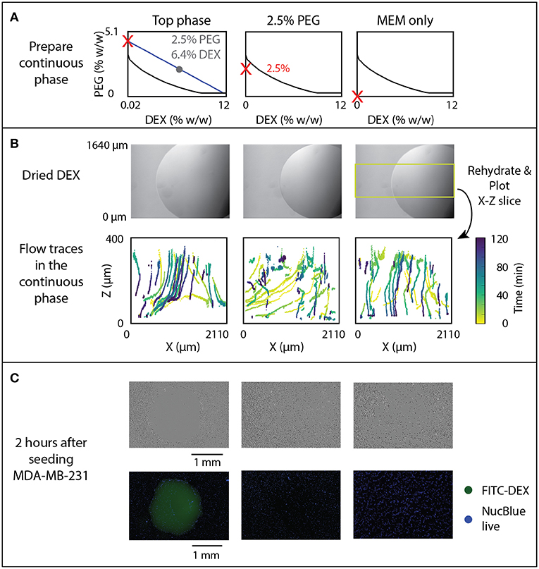 Frontiers | Stigmatic Microscopy Enables Low-Cost, 3D
