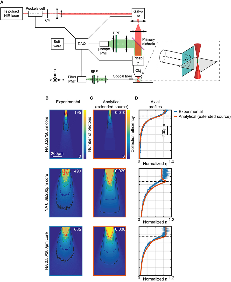 Frontiers | The Three-Dimensional Signal Collection Field for Fiber