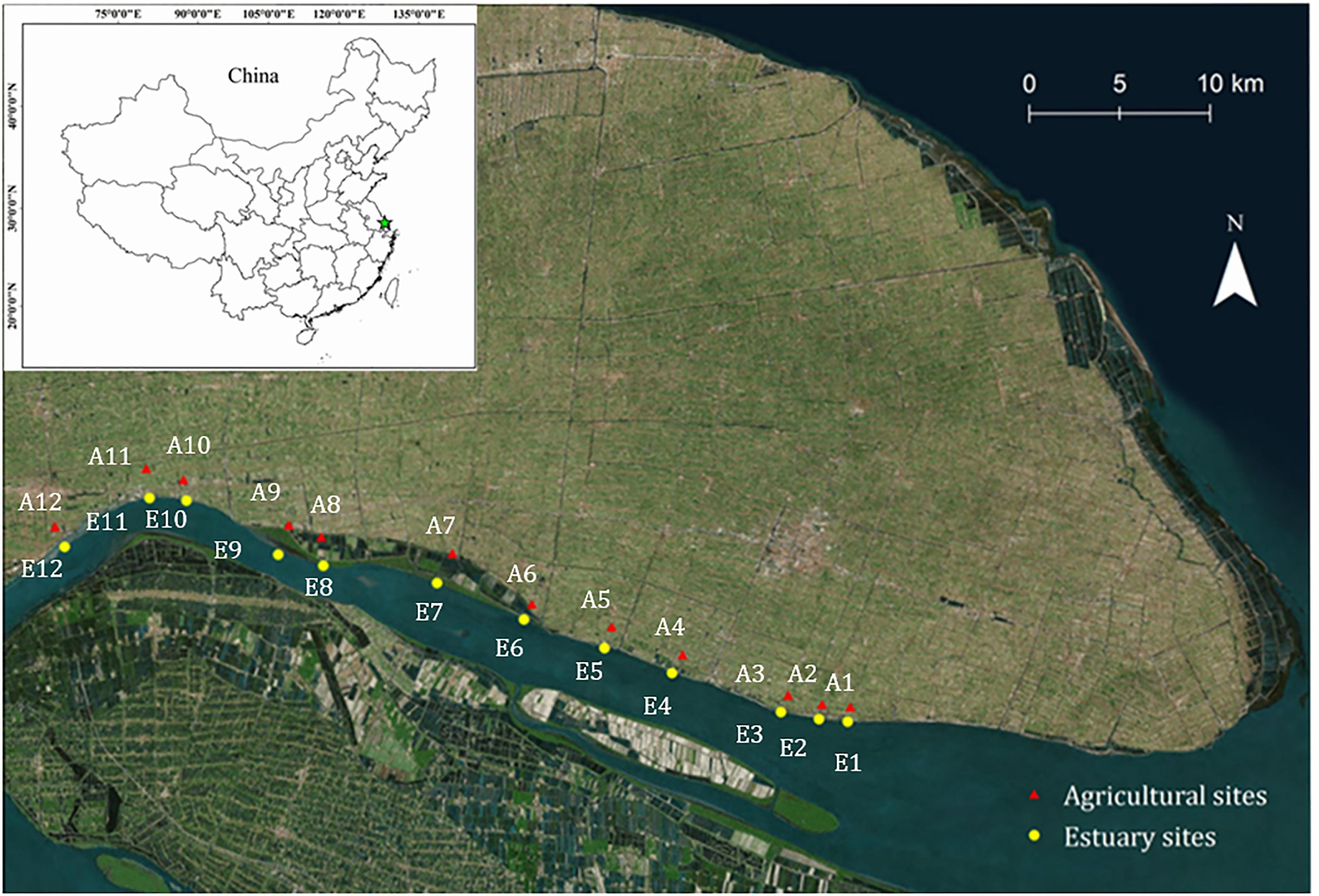 Frontiers Niche Separation Of Ammonia Oxidizers In Mudflat