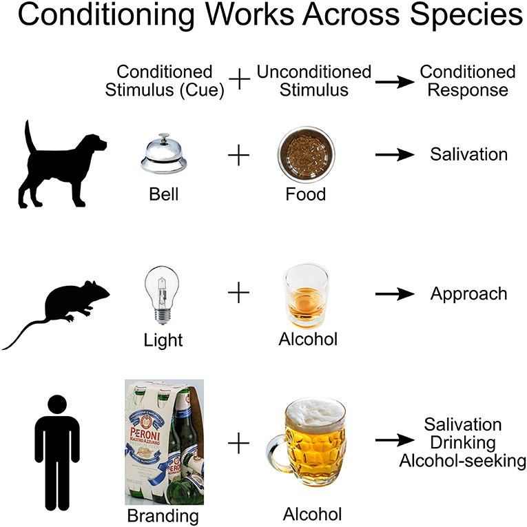 Figure 1 - Classical conditioning works across many different species.