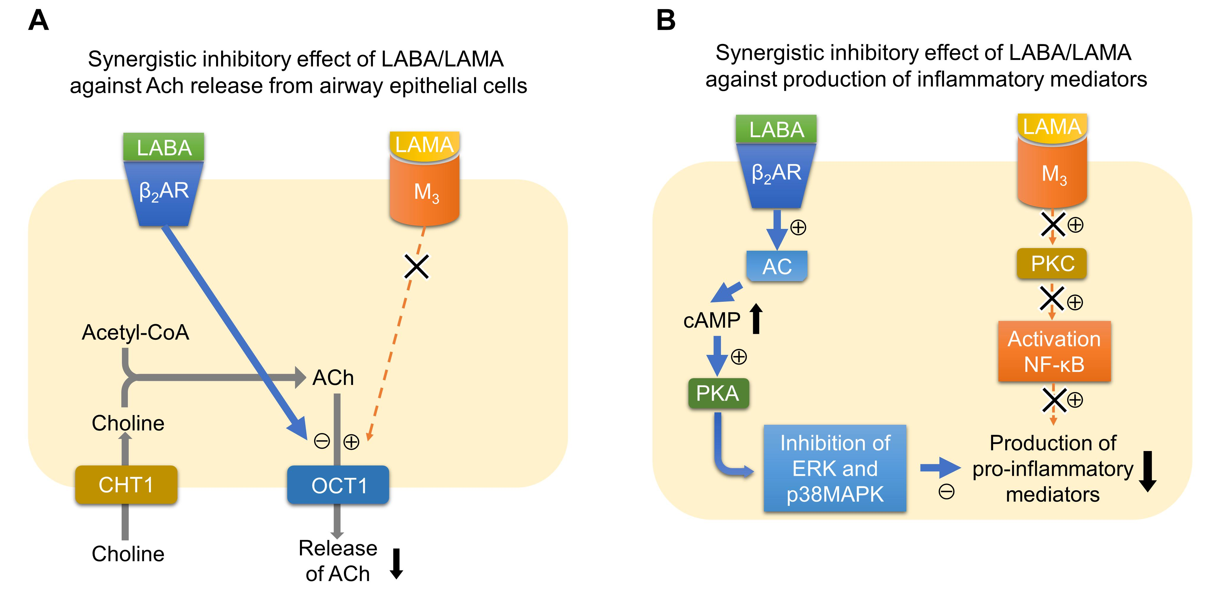 Frontiers   The Cholinergic Pathways in Inflammation A Potential ...
