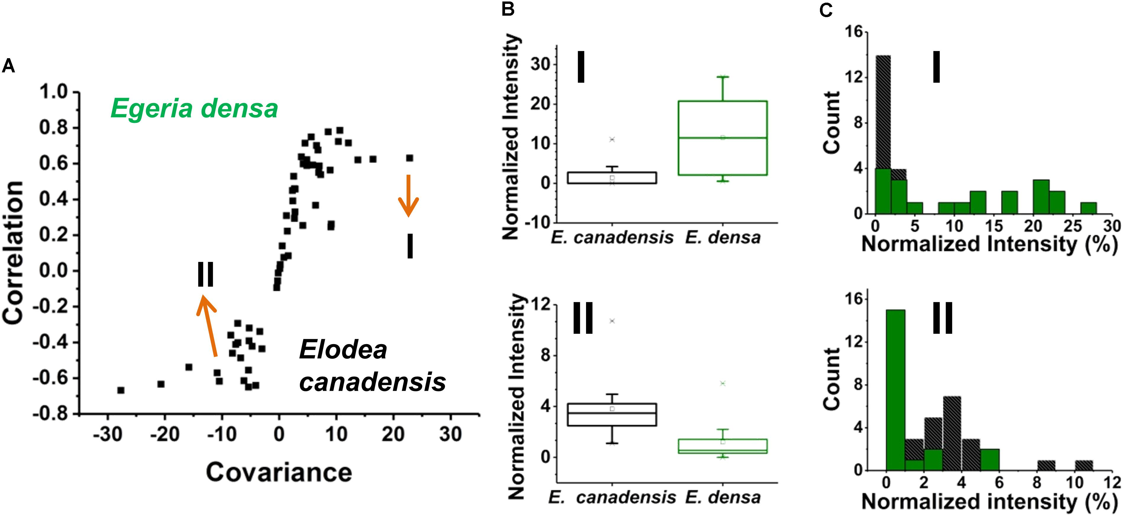 Frontiers | Metabolic Noise and Distinct Subpopulations Observed by