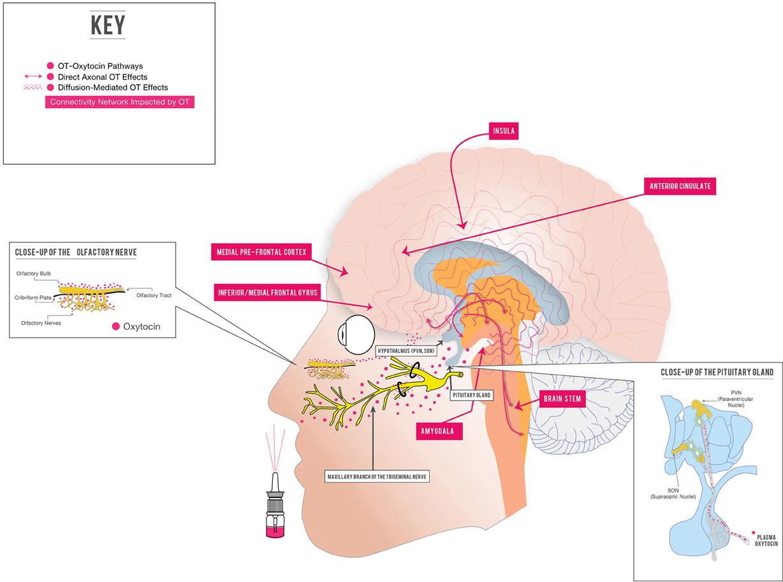 intranasal corticosteroids examples