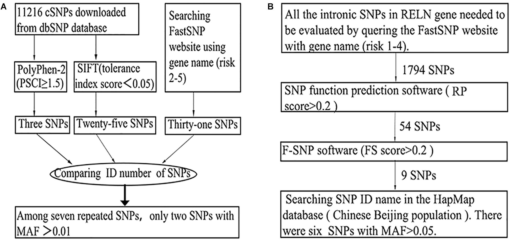 Frontiers | SNP Variation of RELN Gene and Schizophrenia in a