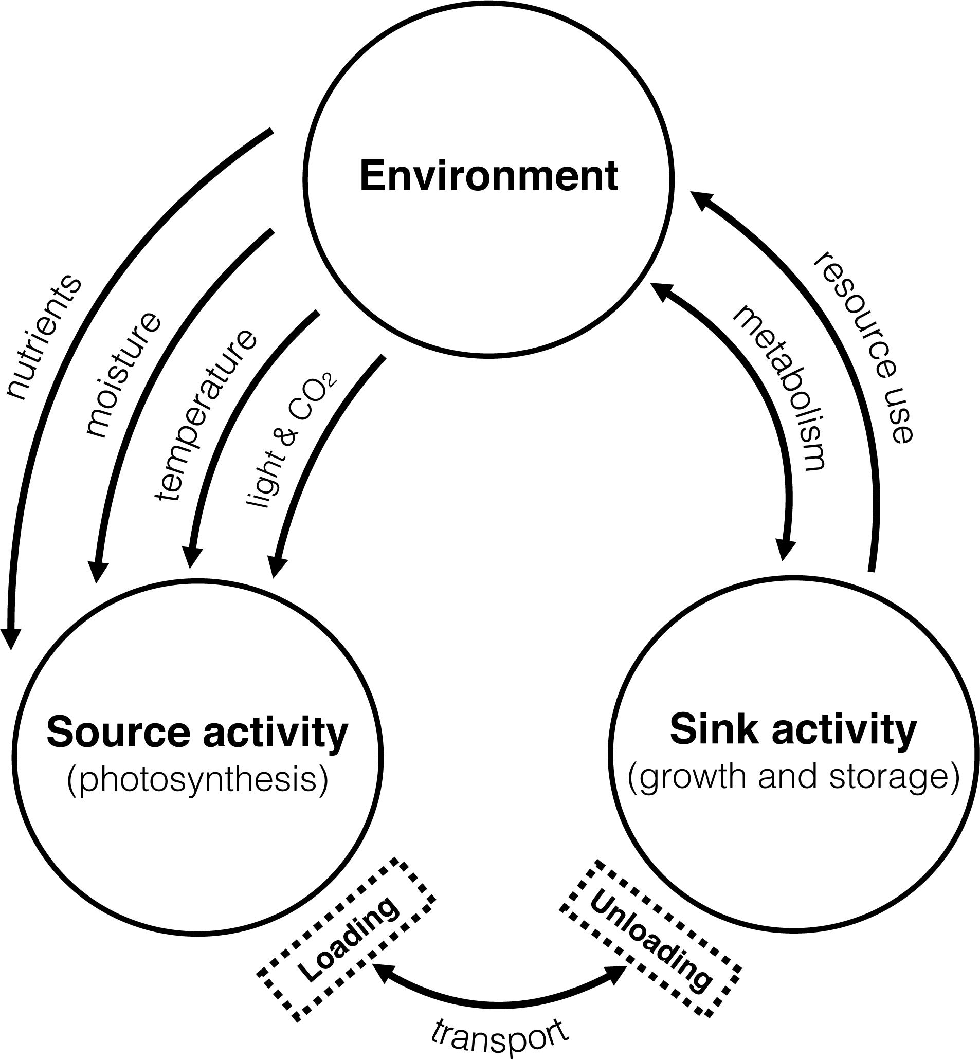Frontiers Source Sink Relationships In Crop Plants And Their