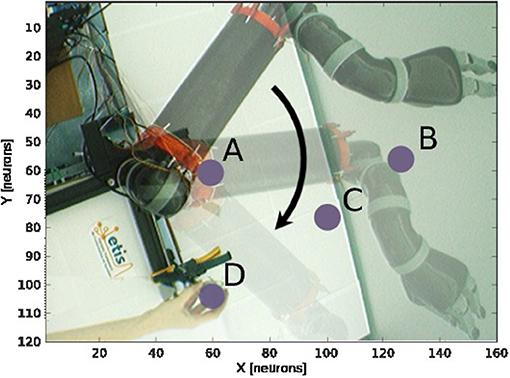 Frontiers   Brain-Inspired Coding of Robot Body Schema