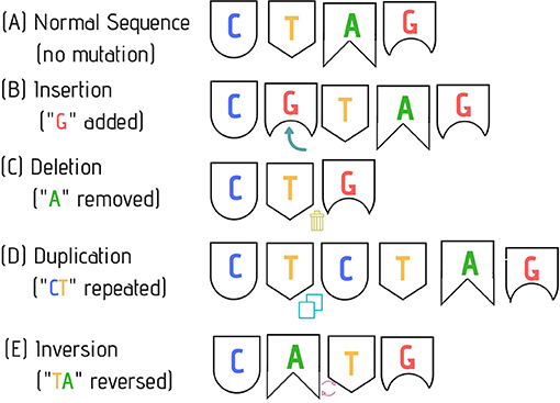 Figure 2 - Examples of common types of mutations.