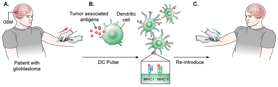 Frontiers | Current Options and Future Directions in Immune