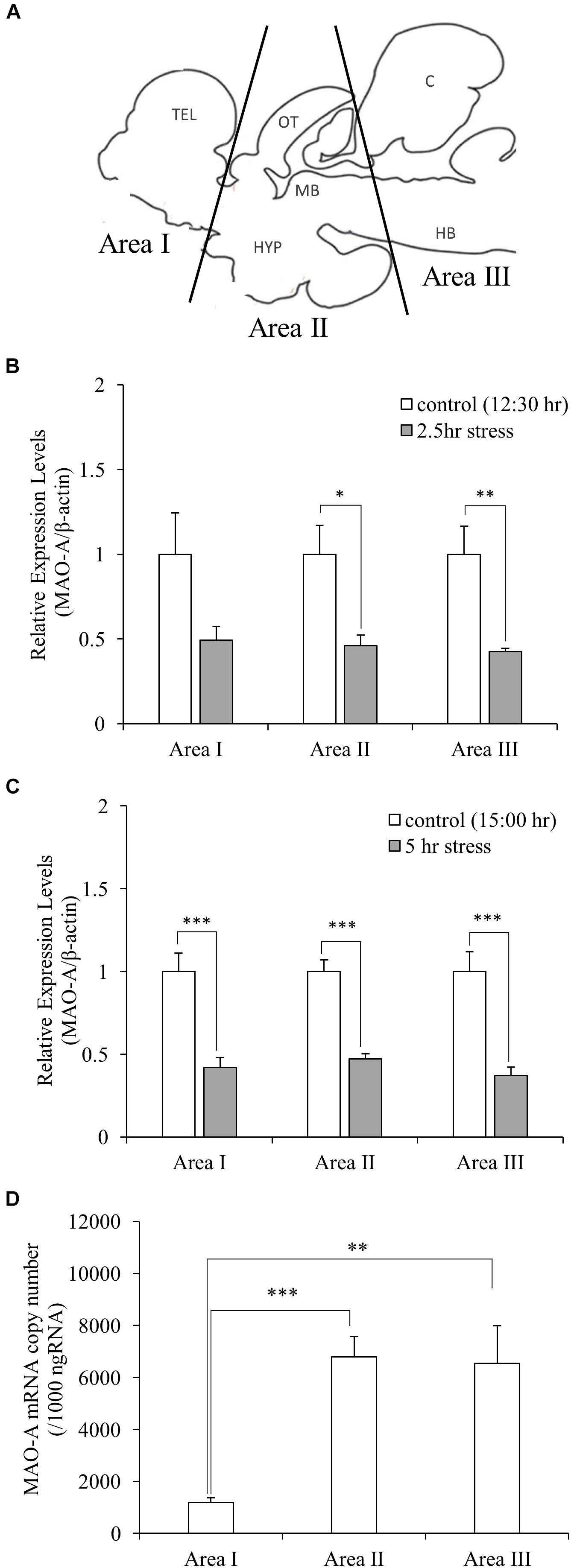 Frontiers   Social Defeat Stress Decreases mRNA for