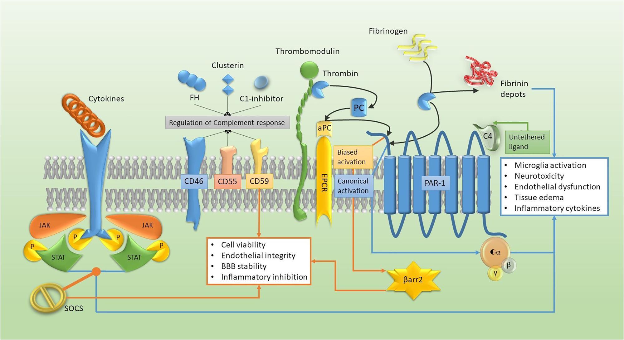The Brain and Host Defense: 9 (NeuroImmune Biology)