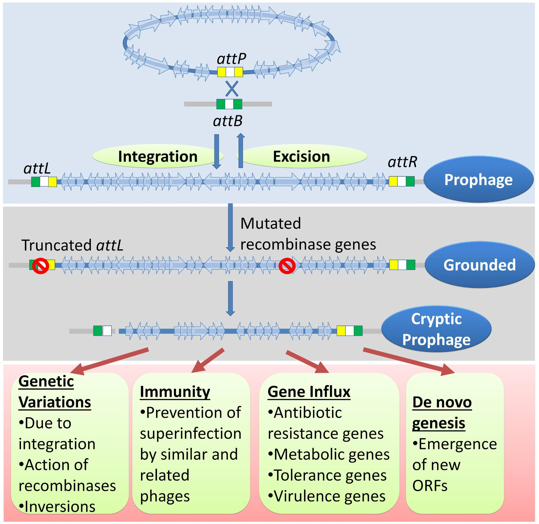 Frontiers | Bacterial 'Grounded' Prophages: Hotspots for