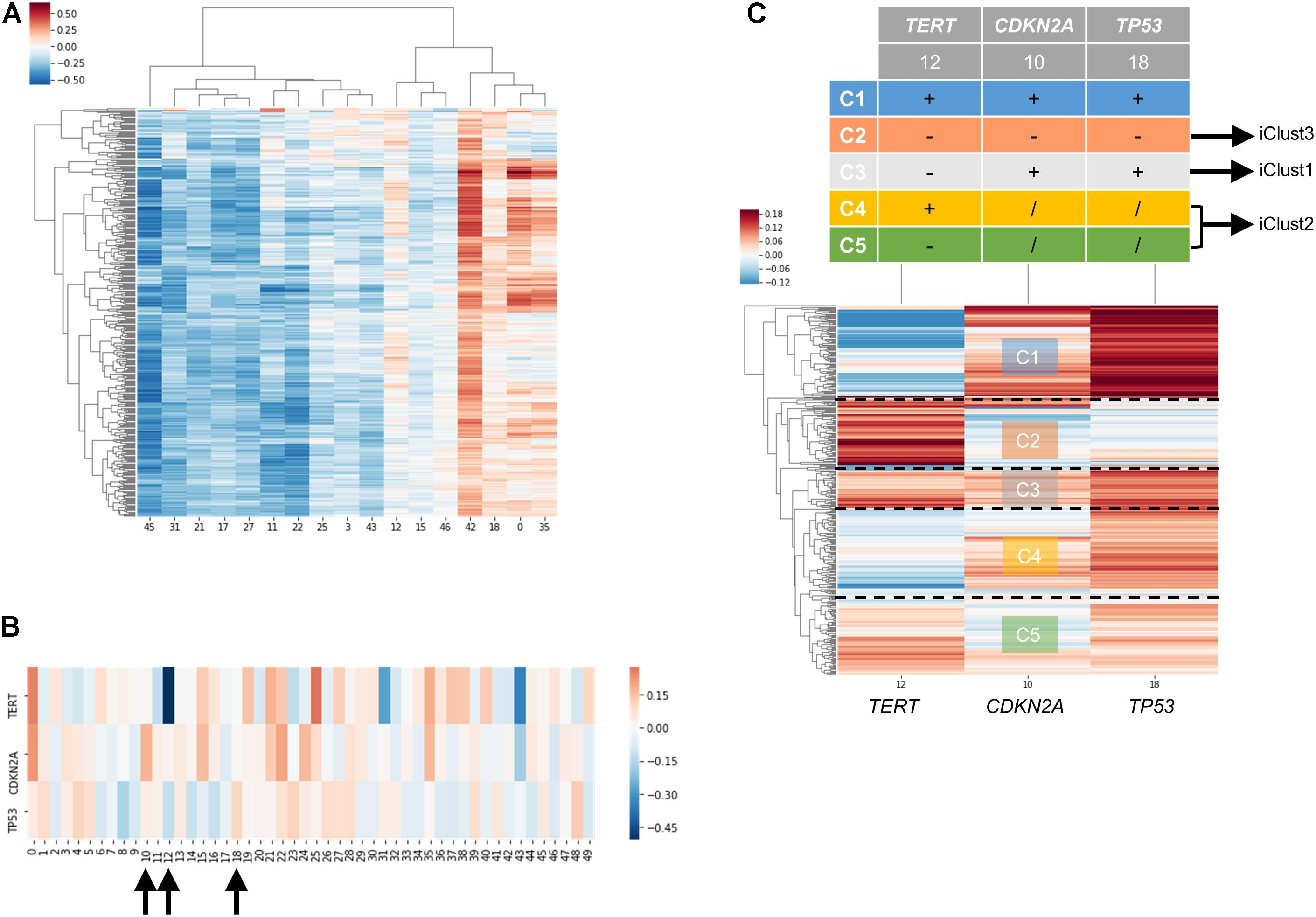 Frontiers | Embedding of Genes Using Cancer Gene Expression