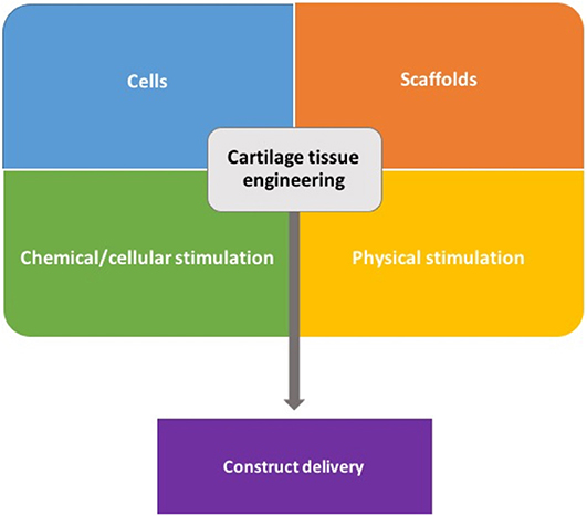 Image Result For Cell Tissue Engineering