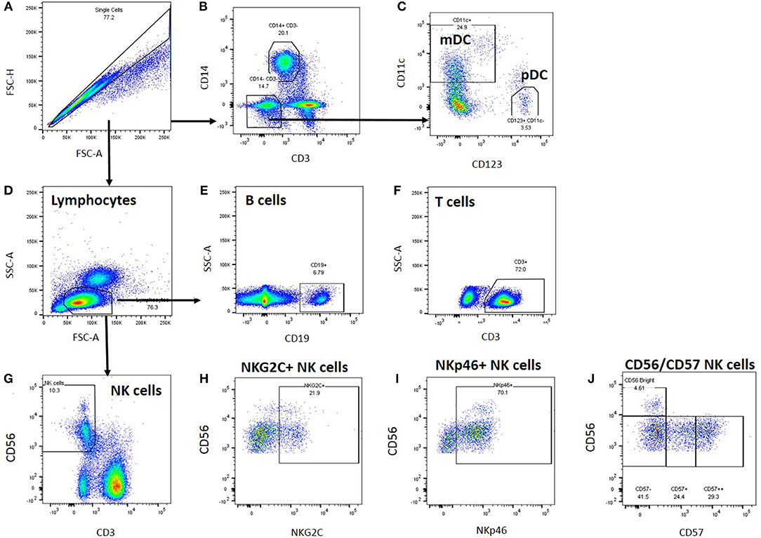 Frontiers | Cellular Immune Function in Myalgic