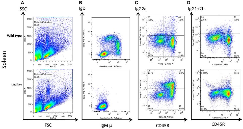 Frontiers   Multispecific Antibody Development Platform